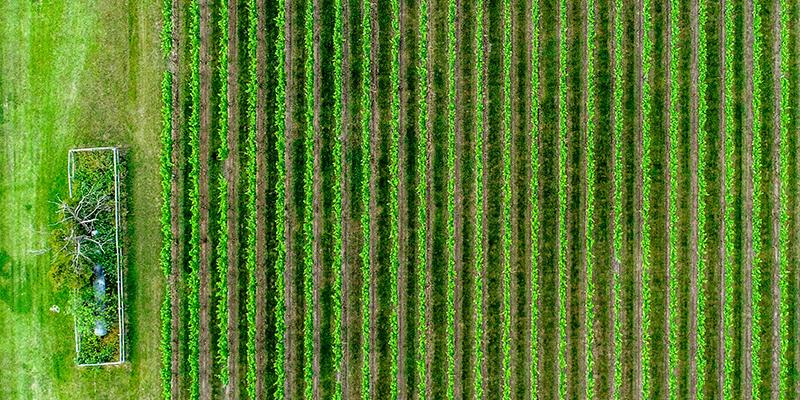 NewHyPe Farming Mulch foil
